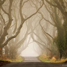 The Dark Hedges 1