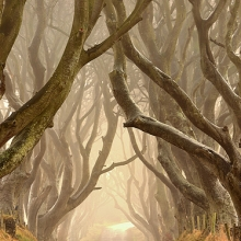 The Dark Hedges 3
