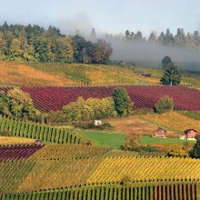 Swiss Vineyards 3